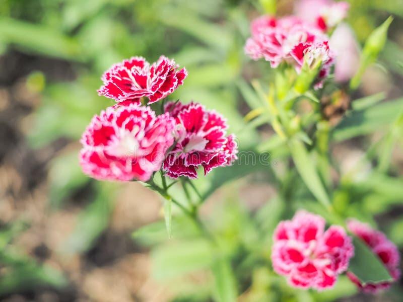 红色花有迷离背景 免版税库存图片