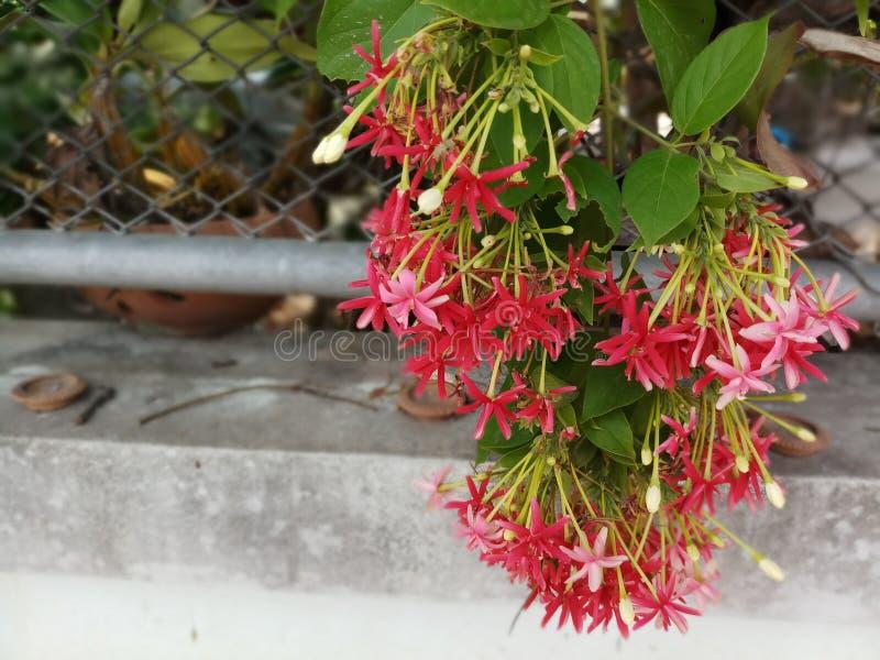 红色花束 库存图片