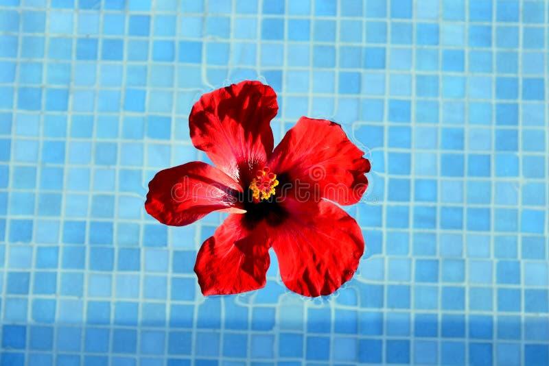 红色花汉语上升了 库存图片