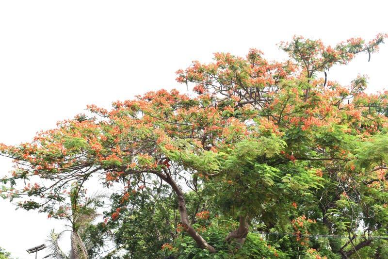 红色花种植 库存图片