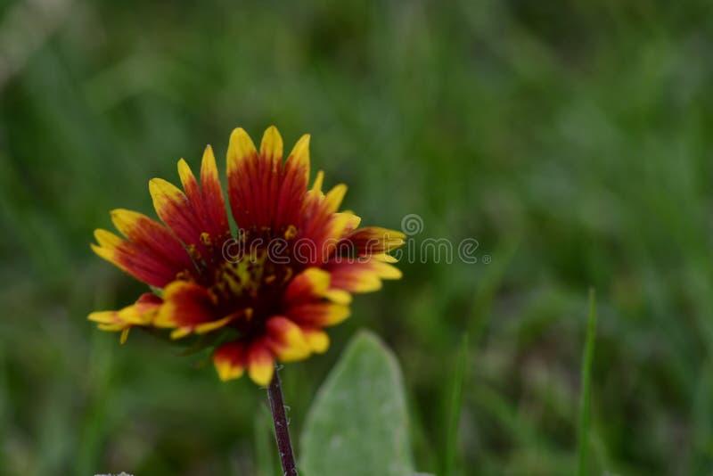 红色花,在五颜六色的庭院里迷人和 免版税库存图片