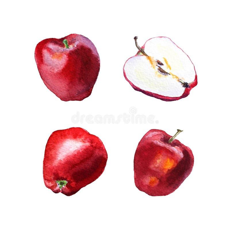 红色苹果水彩绘画  向量例证