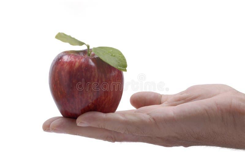 红色苹果男性手 库存图片