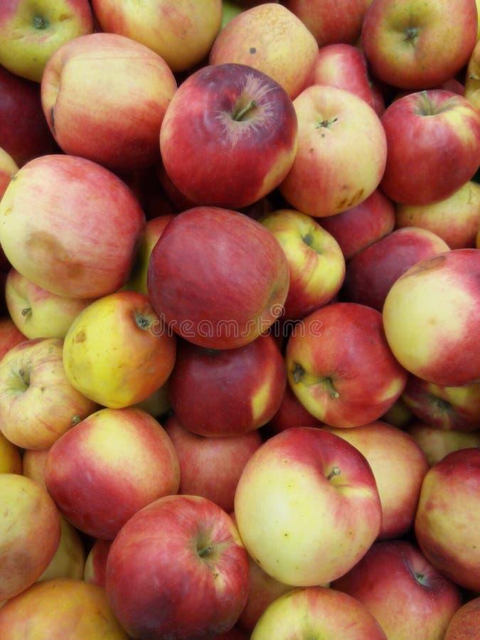 红色苹果Idared 库存照片