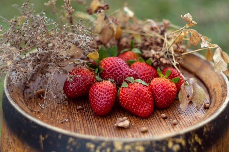 红色草莓和干草在一个葡萄酒桶在庭院里春天 ?? 图库摄影