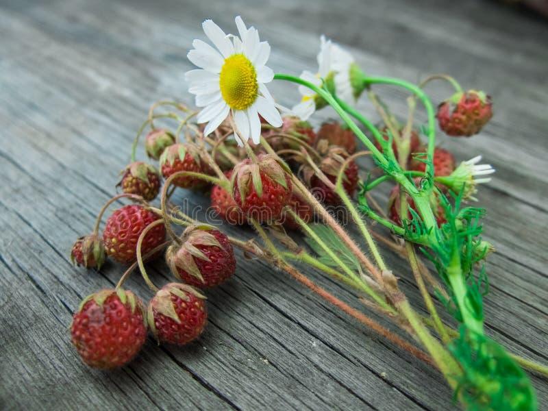 红色草莓和戴西小树枝在一个概略的木板说谎 夏天葡萄酒,农村背景 库存图片