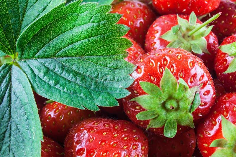 红色草莓细节 免版税库存照片