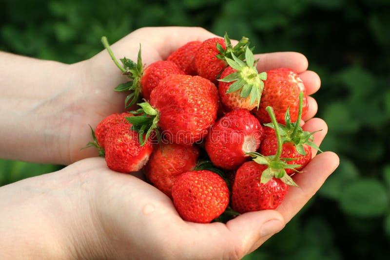 红色草莓 库存照片
