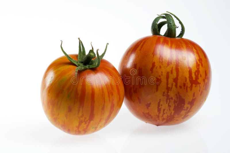 红色蕃茄二斑马 库存图片