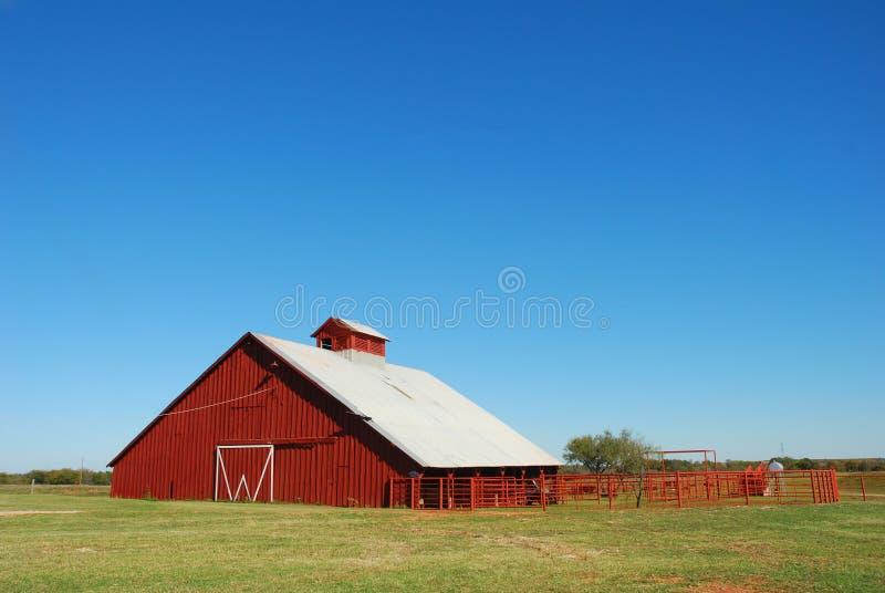 红色谷仓的牛 免版税图库摄影