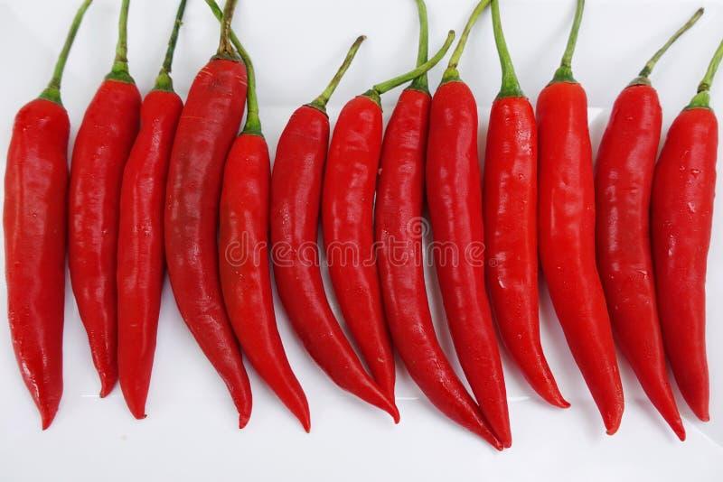 红色辣椒 免版税库存图片