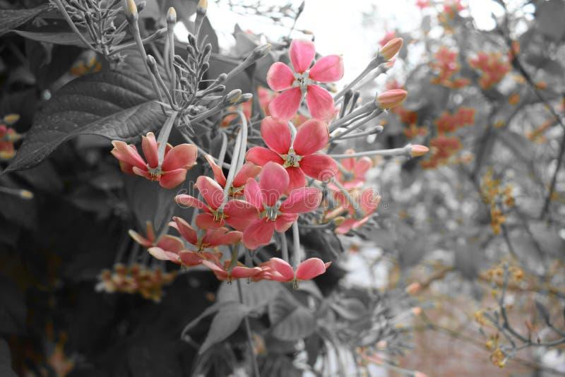 红色迷人的花 库存图片