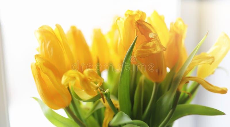 红色郁金香花束在一个花瓶的在窗台 一件礼物为 库存图片