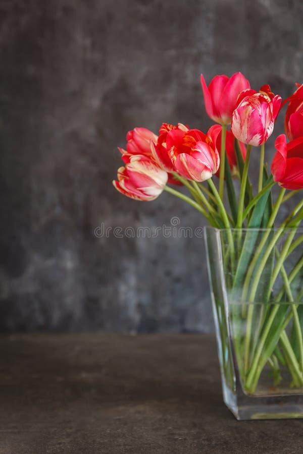 红色郁金香花束在一个透明花瓶的在黑暗的背景 库存图片