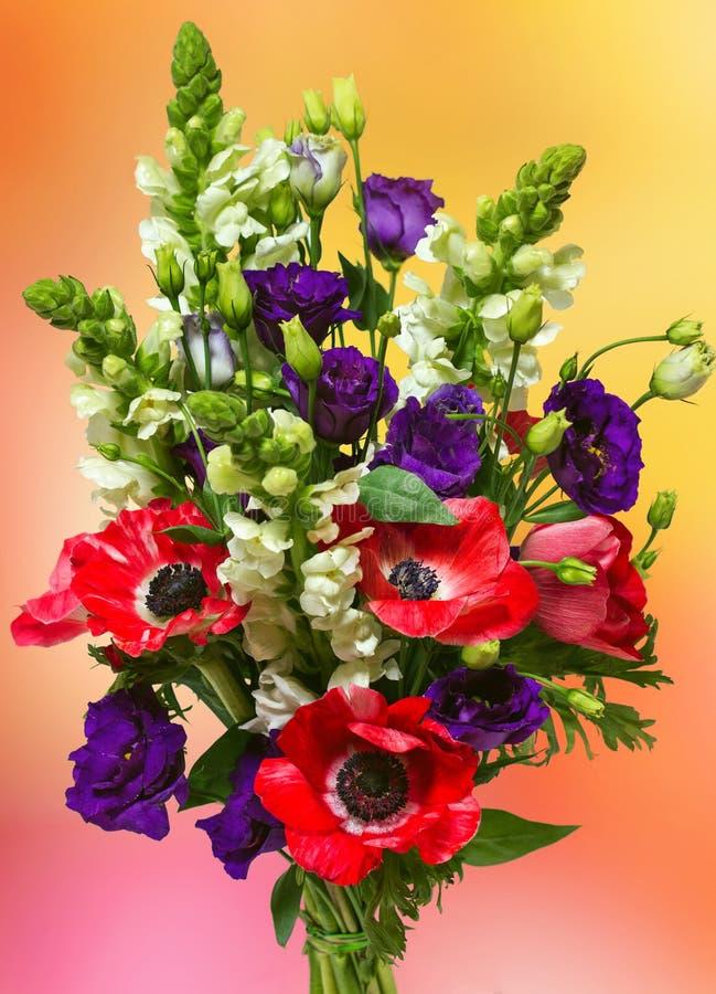 红色银莲花属大花束  库存照片