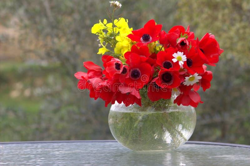 红色银莲花属花束  免版税库存照片