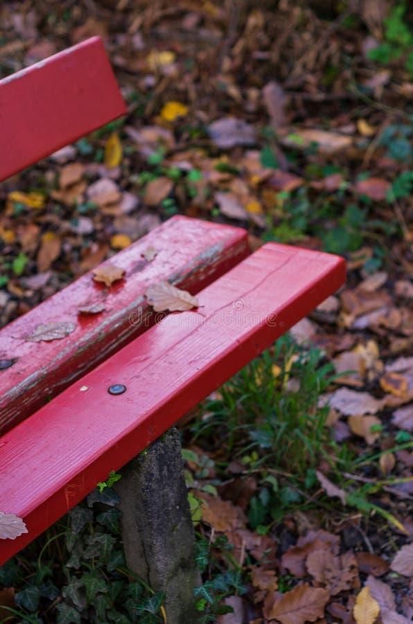 红色长凳在森林,公园在秋天 免版税库存图片