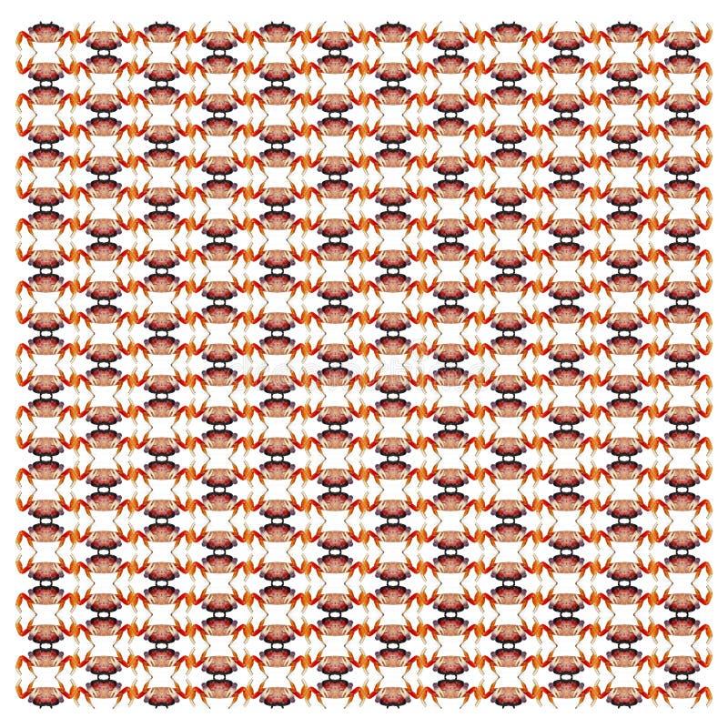 红色陆地蟹,Gecarcinus quadratus,在重复的样式 库存图片