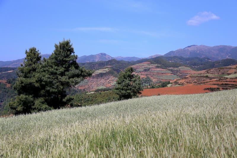 红色领域和风景在云南,瓷 图库摄影