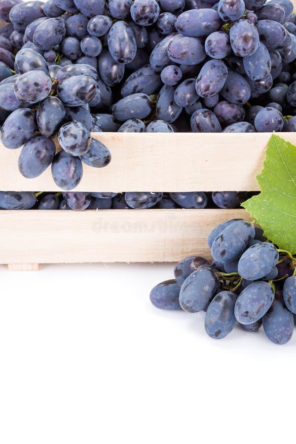 红色食用葡萄(葡萄属)群接近的看法  免版税库存照片