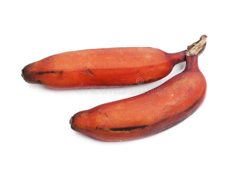 红色香蕉 库存照片