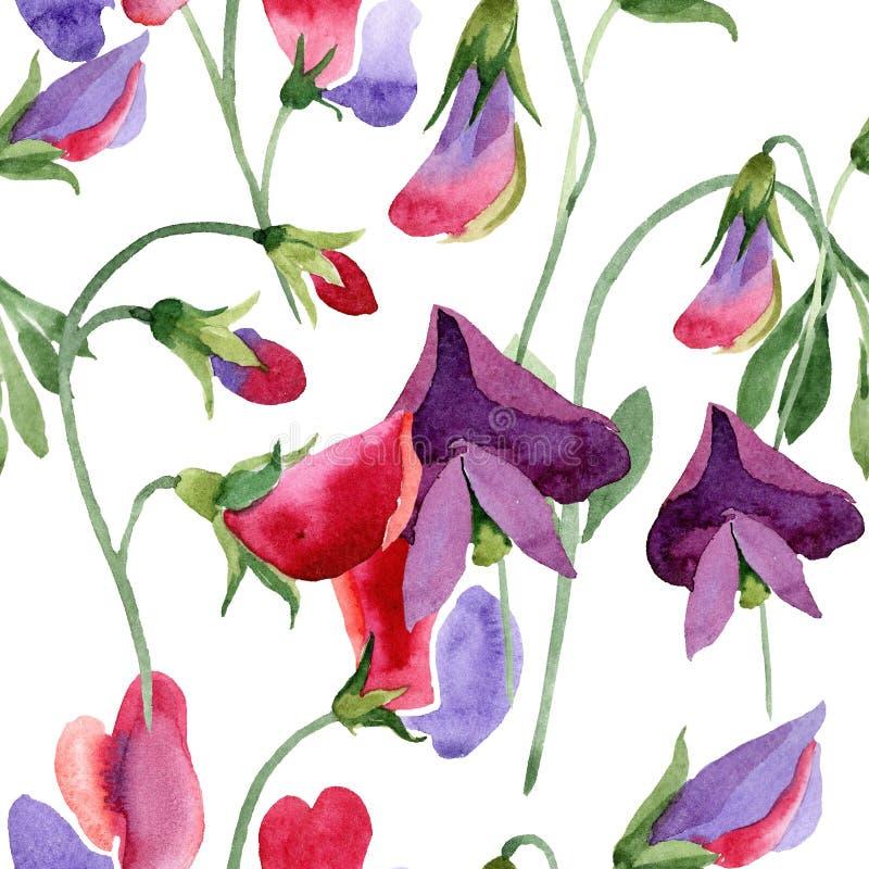 红色香豌豆花花 水彩在白色背景的例证集合 无缝的模式 织品墙纸印刷品纹理 向量例证