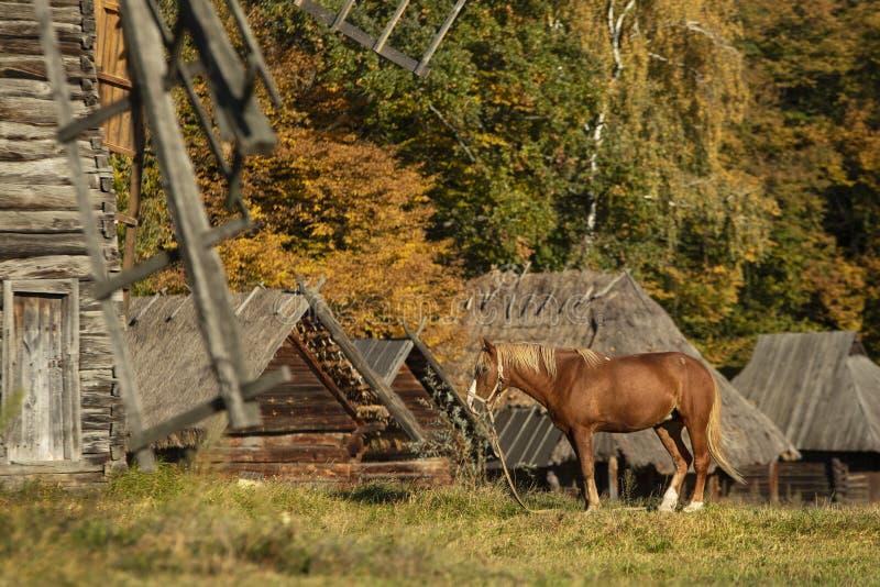 红色马在秋天村庄 库存照片