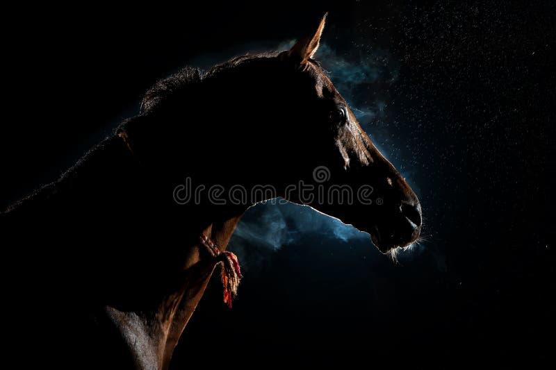 红色马在雨和烟下的夜 库存图片
