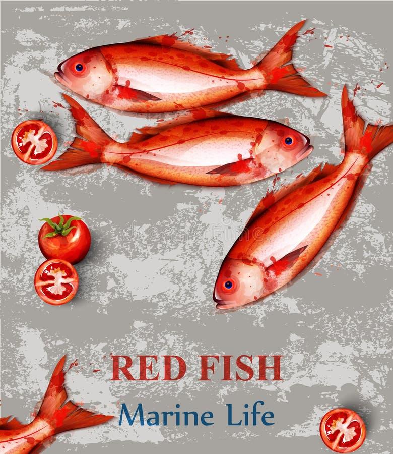 红色鱼水彩传染媒介 在葡萄酒背景的新鲜的小鱼 菜单模板 向量例证