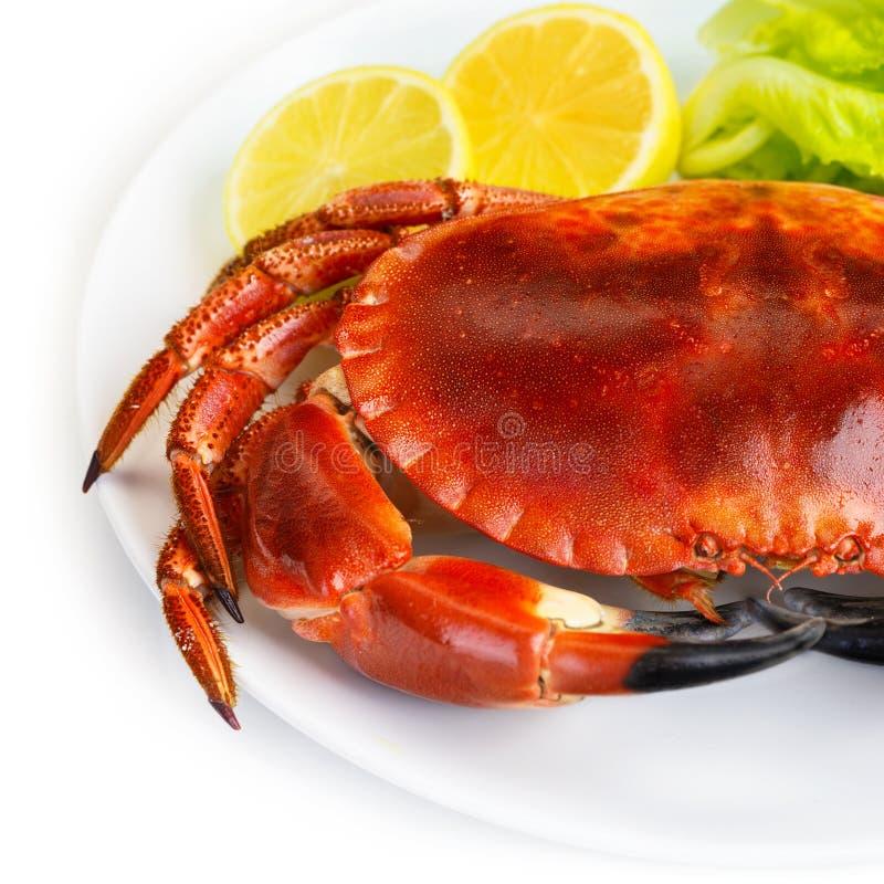 红色鲜美煮沸的螃蟹 免版税库存图片