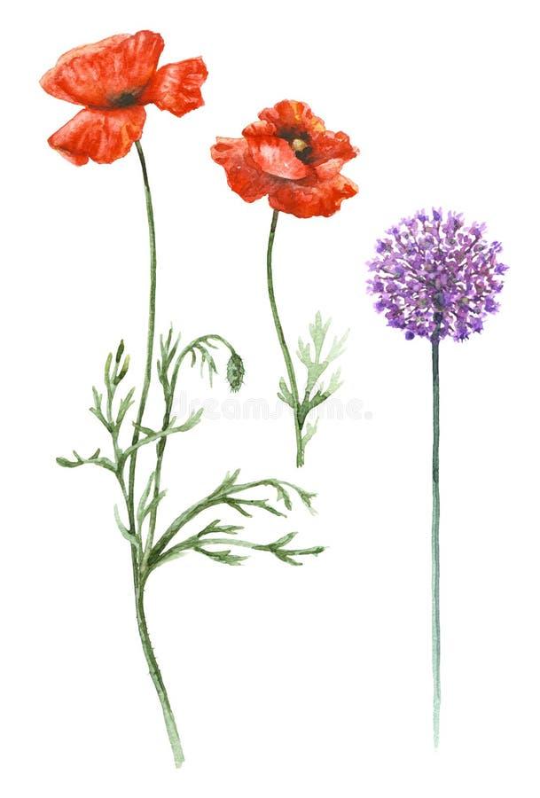 红色鸦片和野葱花 皇族释放例证