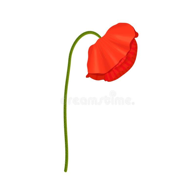 红色鸦片头状花序和词根 o anzac 平的剪影样式 下垂的芽下来 向量例证