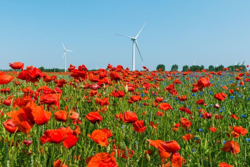 红色鸦片植物在与风轮机的阳光下和树和天空蔚蓝 免版税库存图片
