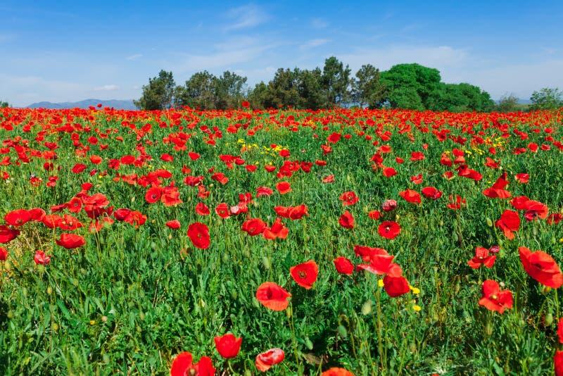 红色鸦片的领域在希罗纳,加泰罗尼亚,近西班牙巴塞罗那 风景自然风景在晴朗的明亮的天 著名游人 库存照片