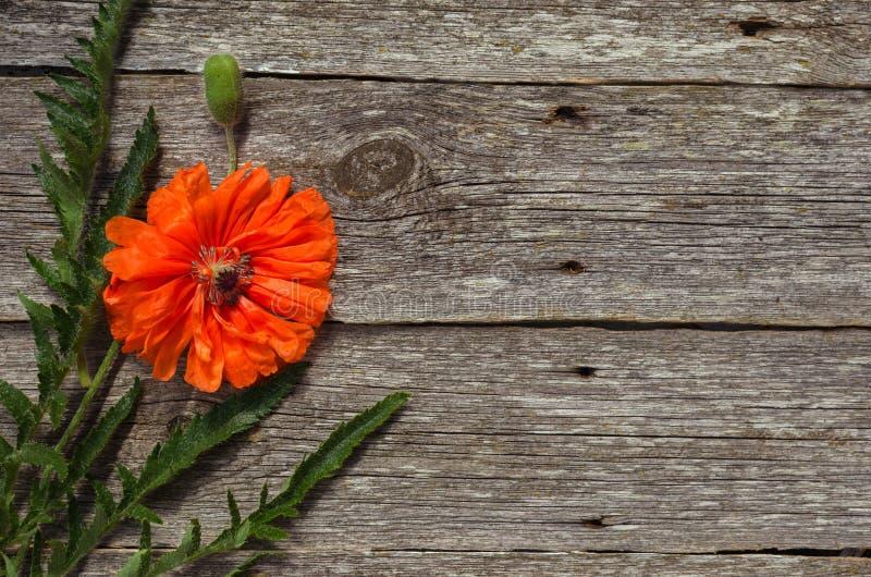 红色鸦片花束在木背景的 红色花花束  领域鸦片 E 免版税库存图片