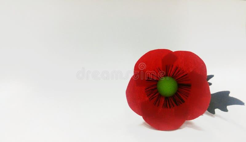 红色鸦片,在白色背景的罂粟属rhoeas 免版税库存照片