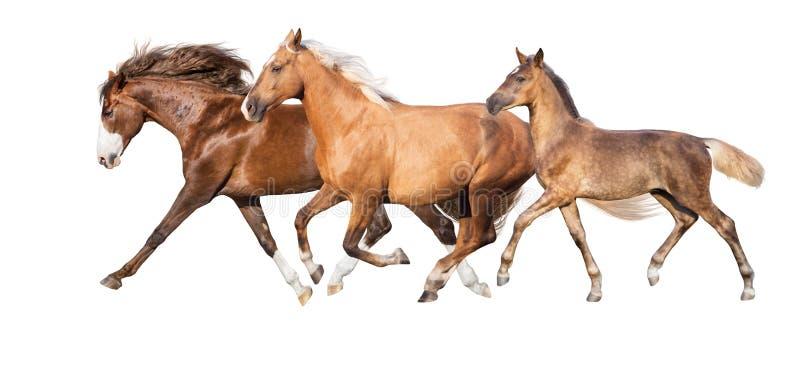在白色隔绝的马 免版税库存图片
