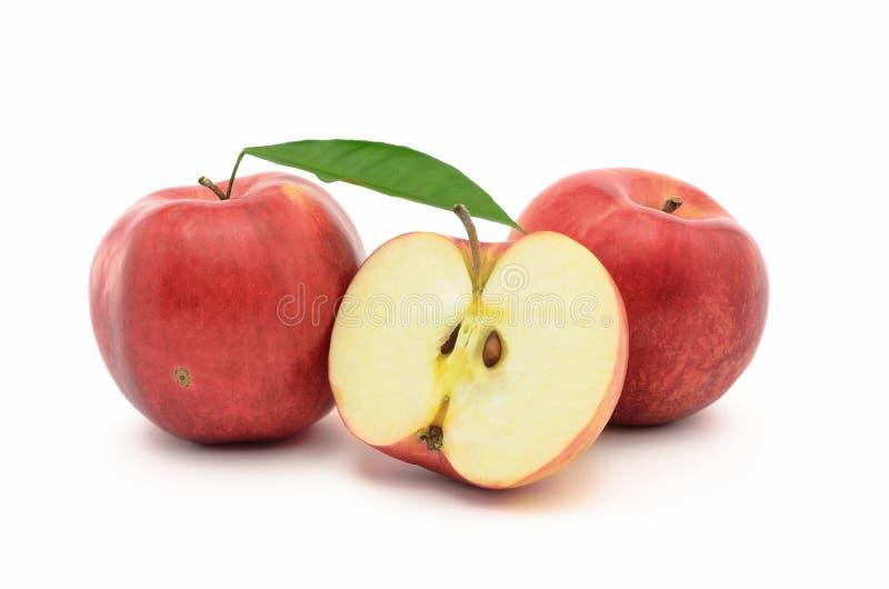 红色,成熟苹果在白色背景隔绝的Jonagold 免版税图库摄影