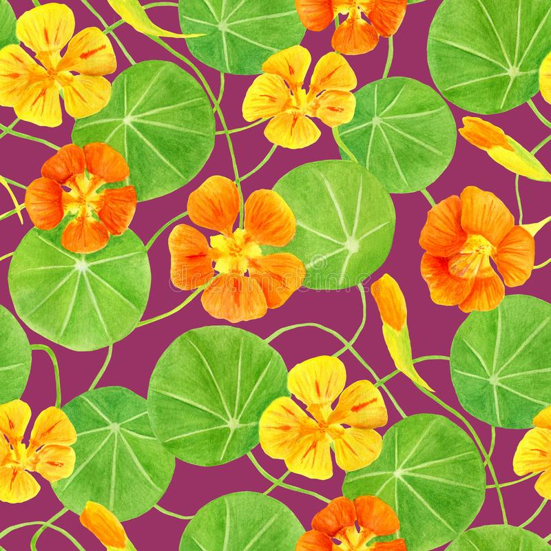 红色,桔子、黄色金莲花花和叶子无缝的样式 手拉的植物的水彩例证与 向量例证