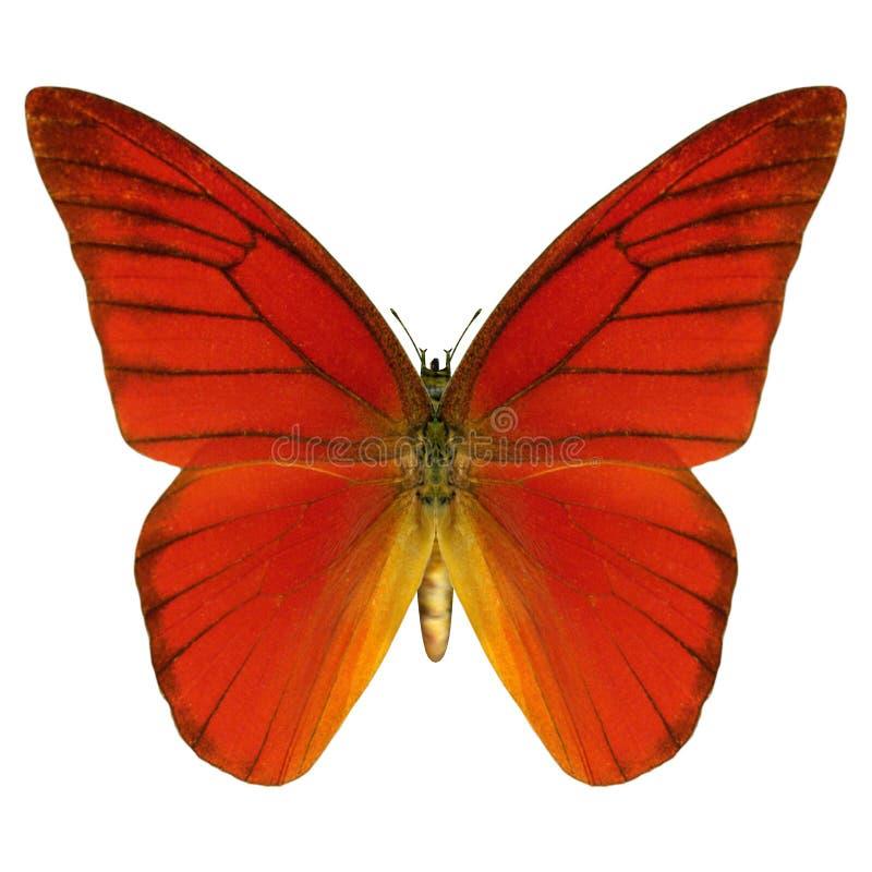 红色蝴蝶 库存例证