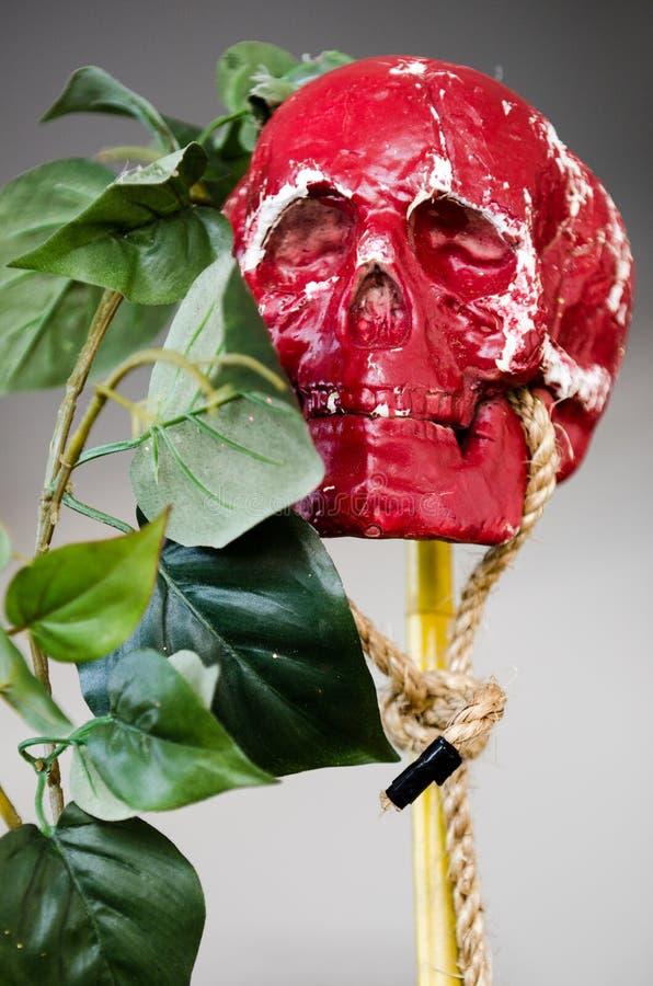 红色头骨&绿色叶子 库存照片