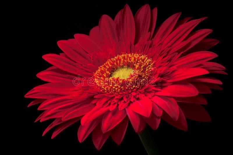 Download 红色 库存照片. 图片 包括有 红色, 节假日, 夏天, 招标, 火焰, 详细资料, 粉红色, 喜悦, 宏指令 - 192406