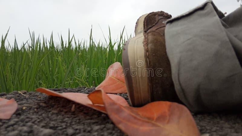 红色Leafes和鞋子 免版税库存照片