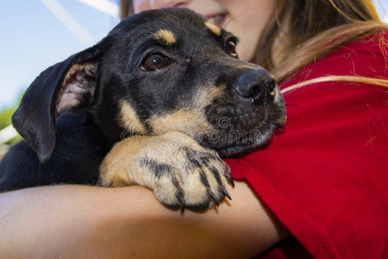 红色T恤杉的年轻微笑的女孩有拿着在她的胳膊的长的金发的一只非常满足的看的小狗 免版税库存照片