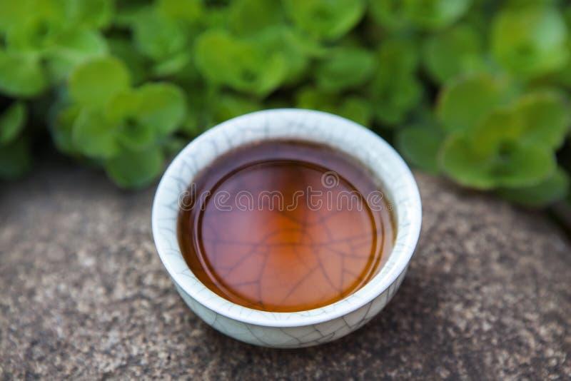 红茶杯子多汁植物石头背景没人 图库摄影