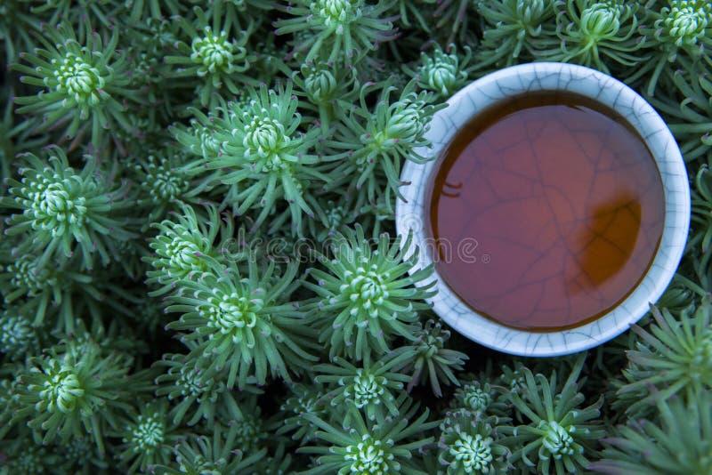 红茶杯子多汁植物背景没人 免版税库存照片