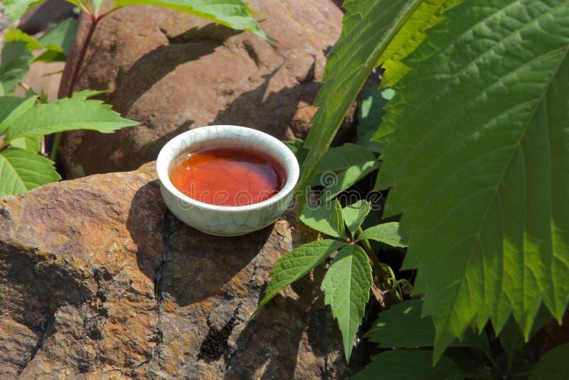 红茶杯子石头背景弗吉尼亚爬行物没人 免版税图库摄影