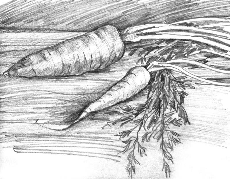 红萝卜手拉的剪影  线性图表例证 免版税库存照片