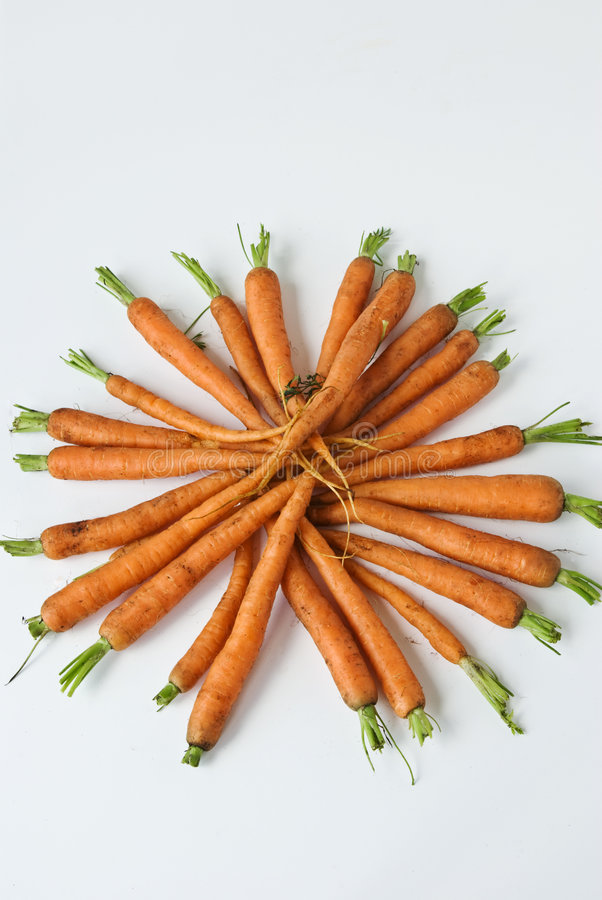 红萝卜显示庭院 免版税图库摄影