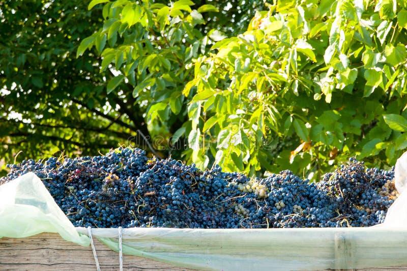 红葡萄堆 免版税库存图片